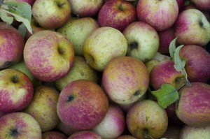 Heirloom Apple Orchard Identification Project