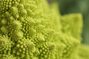 Romanesco Broccoli Veronica Cauliflower Fractals