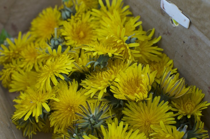 Dandelion Wine, Dandelion Wine, when I finally get some I think it will be fine!