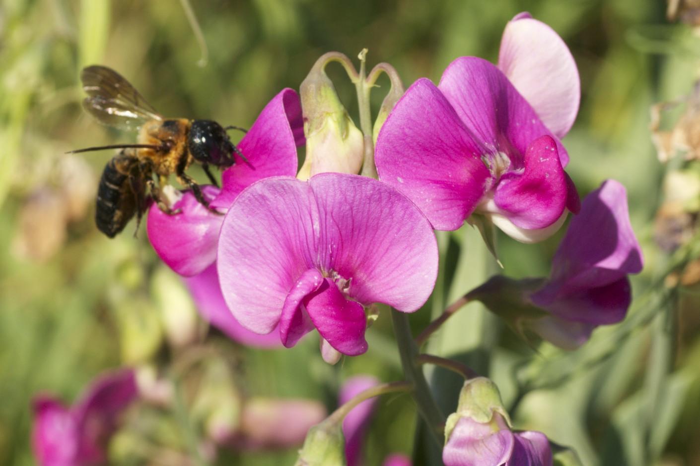 Bumble Bee Bumble