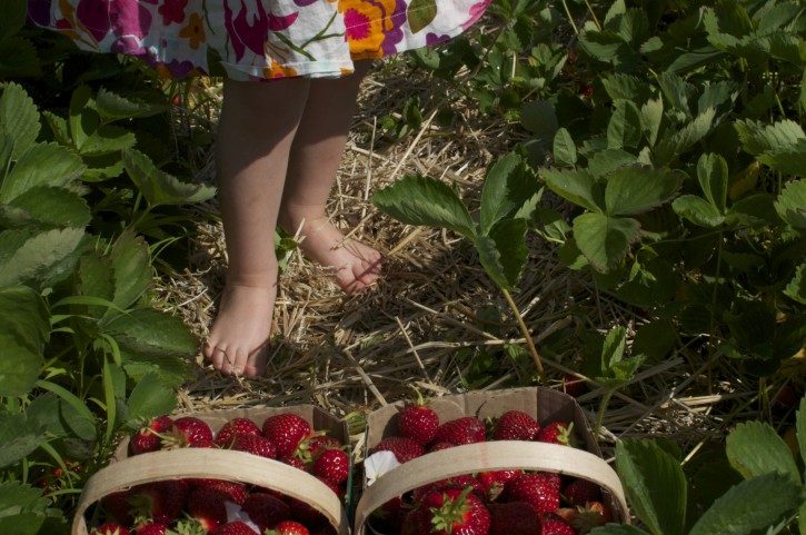 A Little Taste of Summer as we move into Fall – Strawberry Picking and Jam