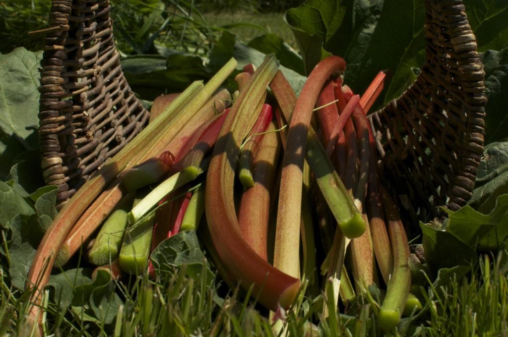 Rhubarb www.CubitsOrganics.com