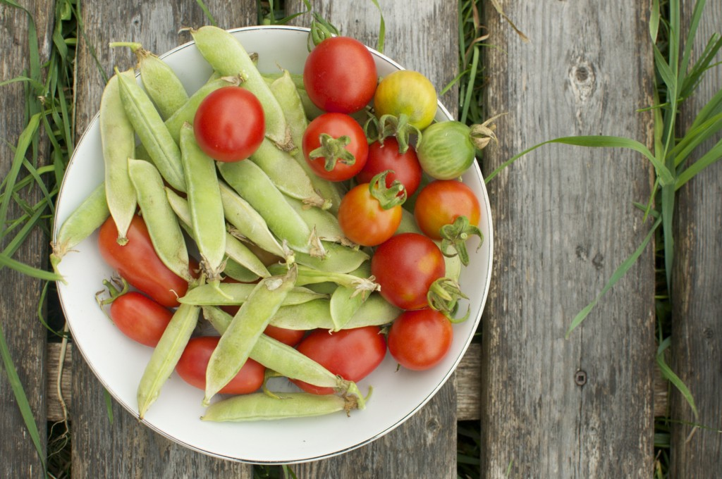 Sugar snap peas and tomatoes www.CubitsOrganics.com