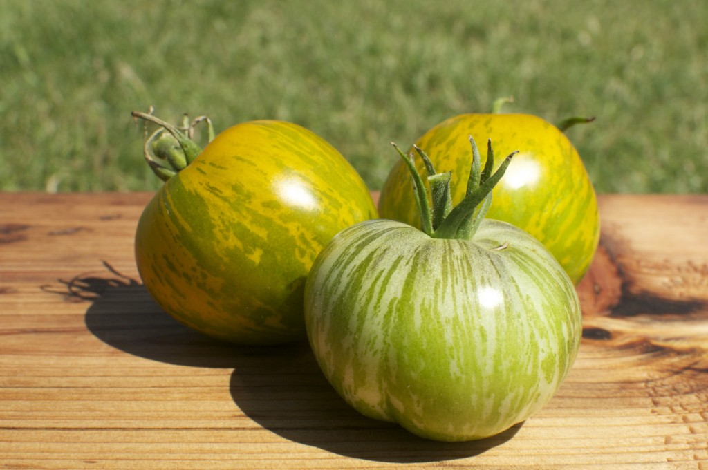 how to tell when your green tomatoes are ripe and ready to eat