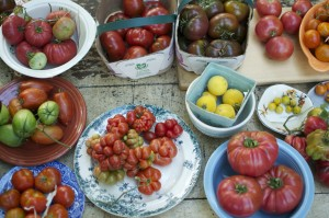 Great Canadian Food Experience; Preserving Heirloom Tomato Sauce