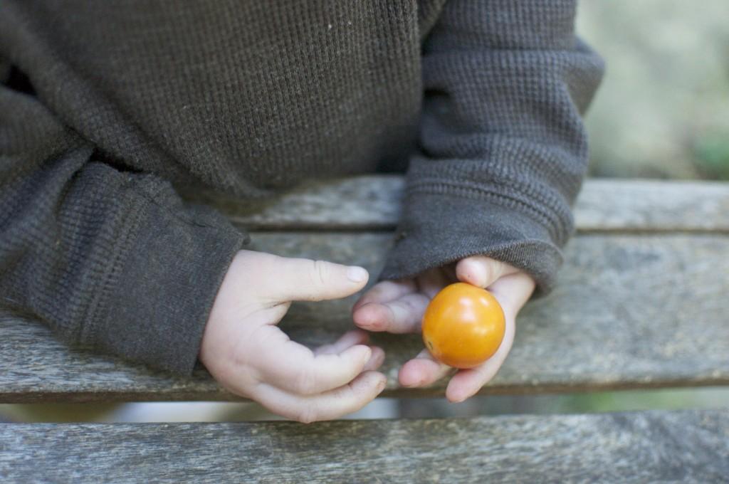 Babies love tomatoes www.CubitsOrganics.com