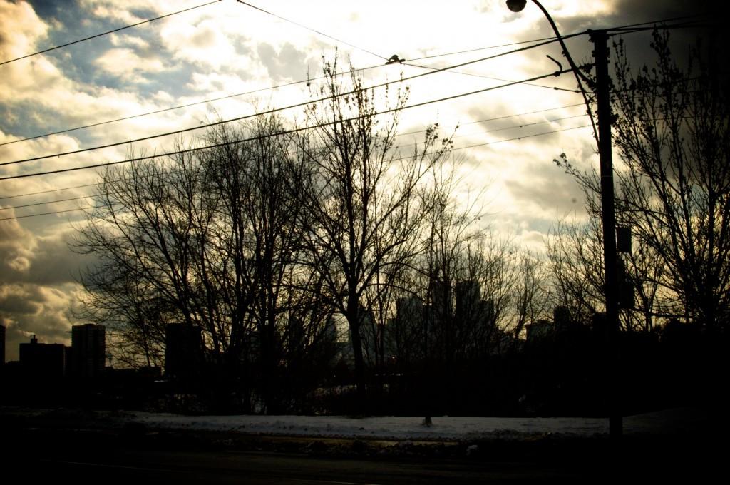 Toronto's Riverdale Park in January www.cubitsorganics.com