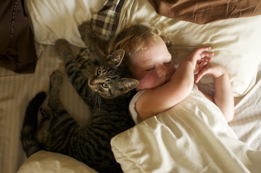 20.08.2014 Toddler naps with cat www.cubitsseedco.com